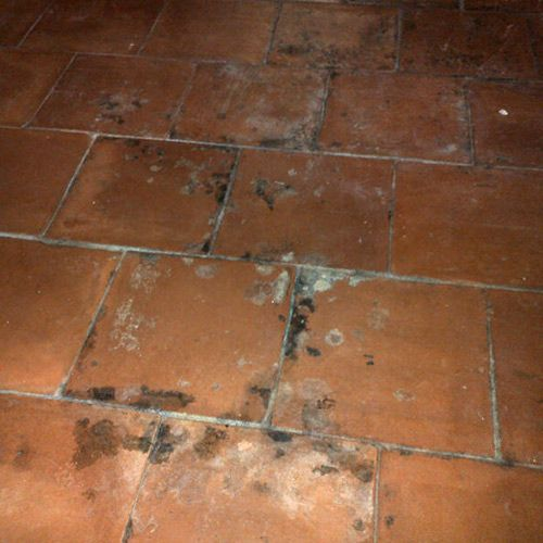 Mould on Terracotta, quarry tiles and brick  What to do